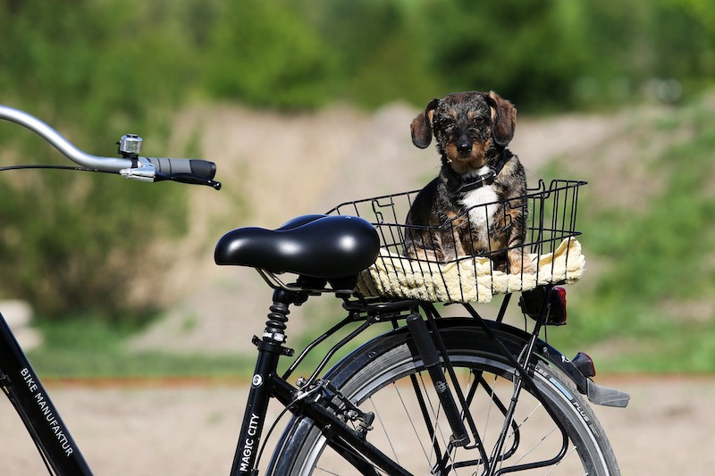 Radtour mit Hund Kühlungsborn